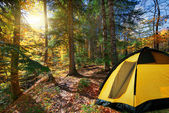 Autumn forest trees. yellow tent,