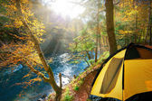 Autumn forest. yellow tent, travel in the autumn forest