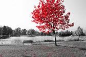 Roter Baum über Parkbank