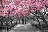 New York City - rózsaszín virágok, fekete-fehér