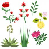 Set of various vector plants