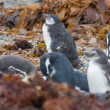 Постер, плакат: Penguins on shore among leaves