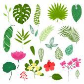 Sada stylizované tropických rostlin, listy a květy