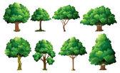 Illustrazione di un insieme di alberi diversi