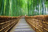 Elérési utat, a bambusz erdő, Arashiyama, Kyoto, Japán
