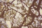 Blurred Tree Branch Background with Retro Instagram Style Filter