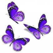 Farfalla viola tre isolato su priorità bassa bianca
