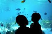 Shark Bay v Sea World Gold Coast Queensland Australia
