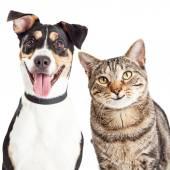 šťastný pes a kočka
