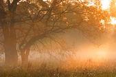 Fall forest, fog, morning, evening, bright yellow sun. Rare beau