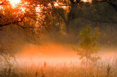 Fall forest, fog, morning, evening, bright yellow sun. Rare beau