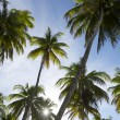 Постер, плакат: Sun Sets Through Coconut Palm Trees Grove