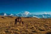 Stepi Kazachstánu, plató Ivana