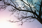 Leafless tree branches against sunset sky. retro style image