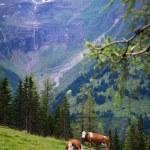 Постер, плакат: Alpine beauty