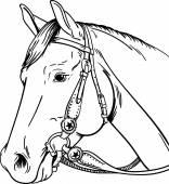 Western horse  vector illustration