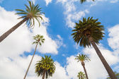 Palm tree in Beverly Hills