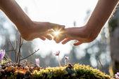 Hand mit Blumen im Garten mit Sonnenlicht