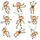 Roztomilý legrační opice