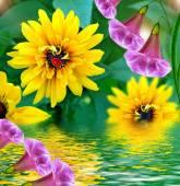 Nyári táj. Rudbeckia virágok