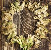 Podzimní pozadí suchá semena javoru na dřevěných texture