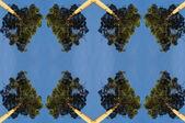 Coniferous pine trees