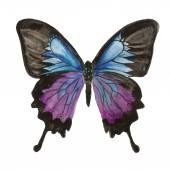 Farfalla. Acquarello su sfondo bianco, illustrazione vettoriale eccellente, Eps 10