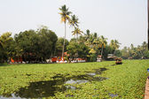 Boats cruising on a canal of the backwaters near Alleppey