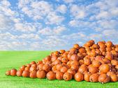 Hromadit velké oranžové přírodní rustikální sklizeň dýňová patch pole