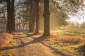 Misty Tree Lane in january