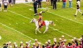 Florida státu seminole fotbal