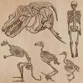 Csontok, koponyák és csontvázak - freehands, vektor