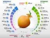 Infographics about nutrients in shallot bulb Qualitative vector illustration about onion vitamins vegetables health food nutrients diet etc It has transparency blending modes masks gradients