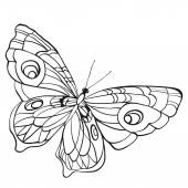 Black and white butterfly with open wings in a top vie
