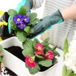 Постер, плакат: Planting plants in pots