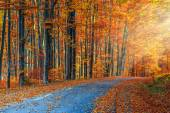 Stunning romantic road in the autumn colorful forest