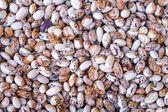 Closeup hromadu fazole na trh