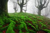Forest with twisted roots and moss