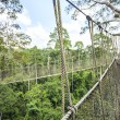 Постер, плакат: Canopy walkway in Kakum National Park Ghana West Africa
