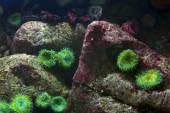 Obrázek pozadí akvária