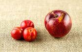 Vértes bonsai cseresznye-szilva mellett európai vörös szilva