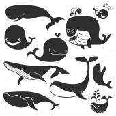 Vintage Whale chalk Characters Hand drawn vector illustration