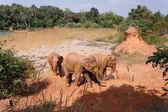 Mladá asijská sloni hrají slané mokřiny
