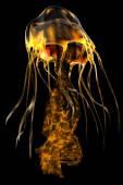 Záře zlatou medúzu