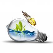 Glühbirne mit Pflanzen, Wasser in
