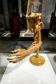 Lidská ruka na výstavě lidské tělo v St. Petersb