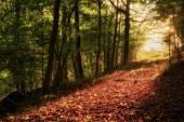Verzauberte Herbst Forrest