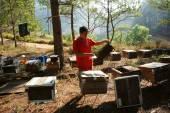 Asie včelařství, vietnamské včelaře, úl