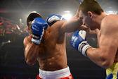 World series boksz: Ukrajna otamans vs brit lionhearts