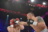 Box boj o titul wbo mezikontinentální bojová
